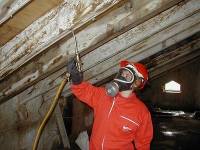 Control de termitas en Valencia - Fumigaciones y plagas